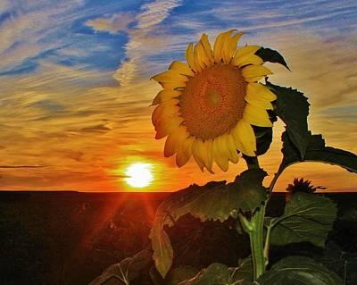Photograph - Sunflower Sunset in Kansas by Greg Rud