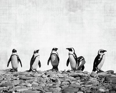 Penguin Photographs