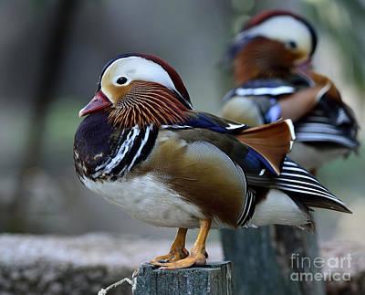 Avian Art
