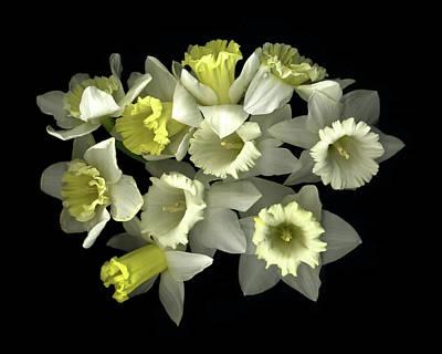 Daffodil Paintings