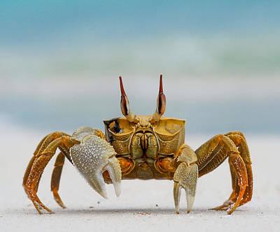 Ghost Crab Art