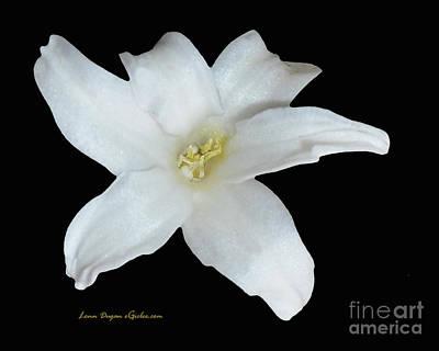 Photograph - Hyacinth #192 by EGiclee Digital Prints