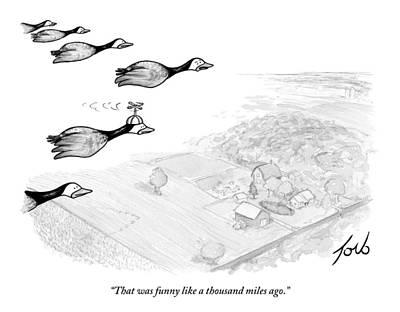 Canadian Goose Drawings