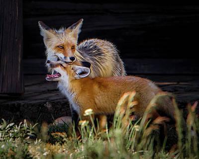 Photograph - fox by Cameron Knudsen