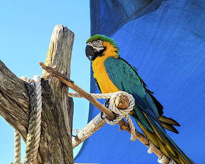 Photograph - Parrot by Donald Rogers