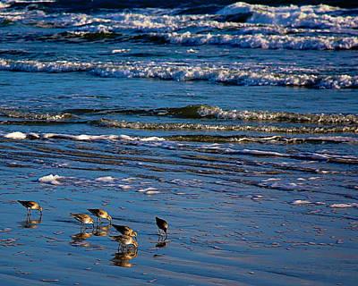 Photograph - Sandpiper Reflection by Kirsten Aufhammer