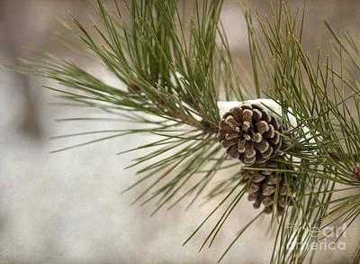 Pinecone Photographs