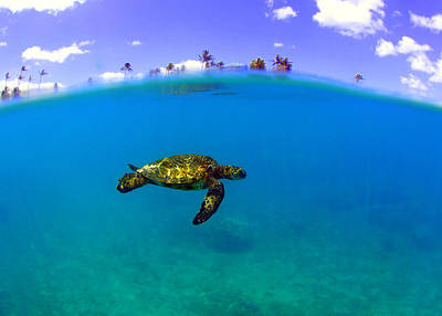 Photograph - Turtle Island by Todd Hummel