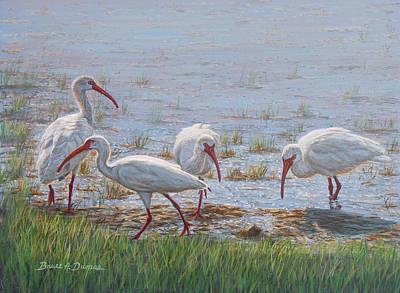 Ibis Paintings