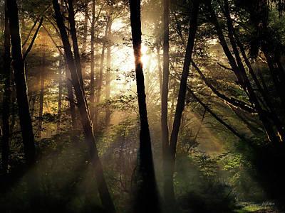Siuslaw National Forest Art