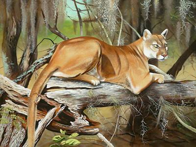Florida Panther Paintings