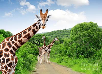 Zoological Photographs