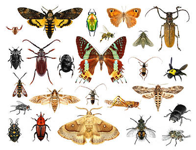 Arthropod Art Prints