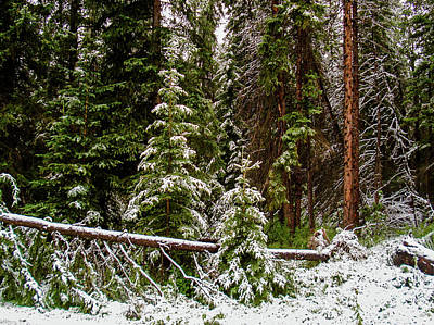 Photograph - Snowfall in Banff by Cameron Conway