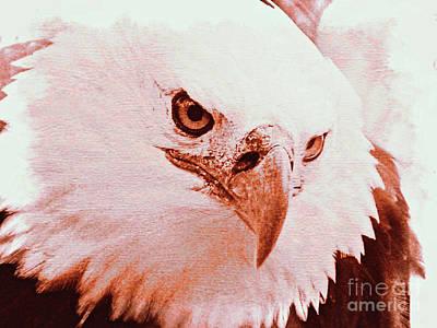 Photograph - Bald Eagle by Jurgen Huibers