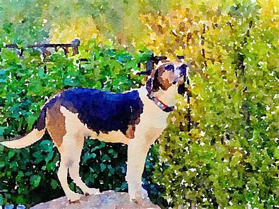 Photograph - Francesca the Coonhound by Elizabeth Rose