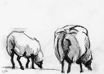 Drawing - Sheep on Achill by Catherine Considine
