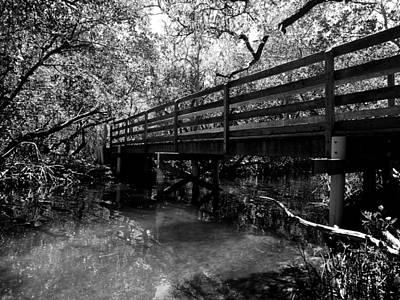 Photograph - Bridge through the Mangroves by Robert Stanhope