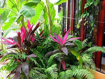Photograph - Colorful Tropical Plants by Elizabeth Rose