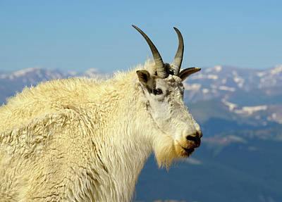 Photograph - King of the Mountain by Alan Boucher