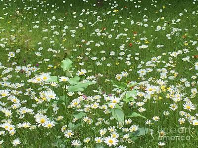 Photograph - Spring Time Daisies by Daniel Derieg