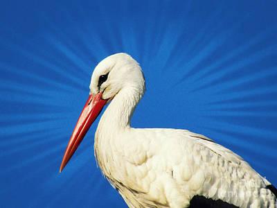 Photograph - Stork by Jurgen Huibers