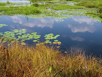 Photograph - Water lily pads and cloud reflections by Louis Dallara