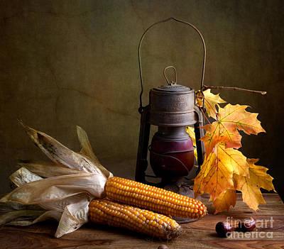 Vegetable Photographs