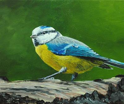 Painting - Blue Tit Bird by Nolan Clark