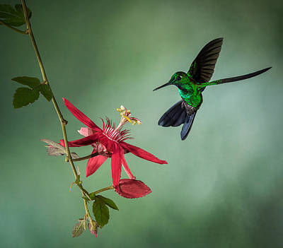 Costa Rica Photographs