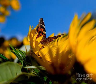 Photograph - Butterfly flower by Sherry Little Fawn Schuessler
