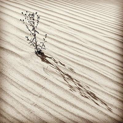 Desert Photographs