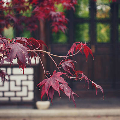 Photograph - Acer 2 by Patrick Horgan