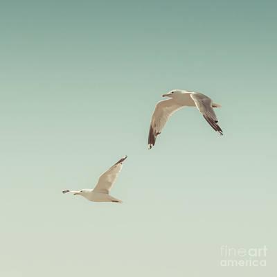 Seagull Photographs
