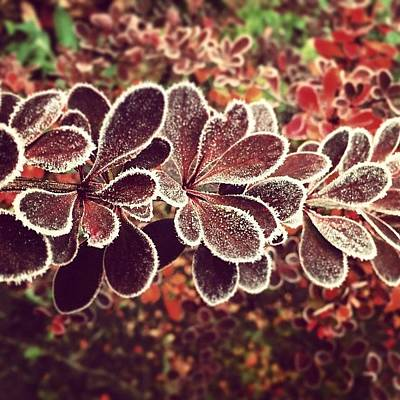 Frost Photographs