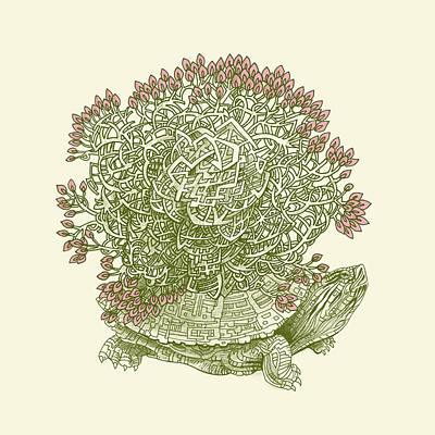 Reptile Drawings