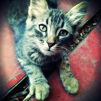 Designs Similar to Little Intrepid Cat! :)
