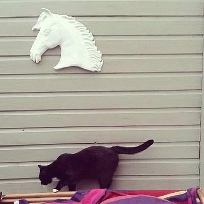 Pussycat Art