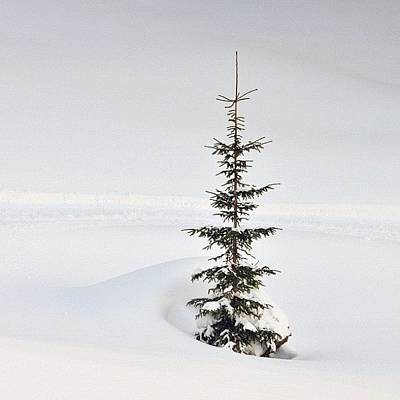 Snow Cover Wall Art