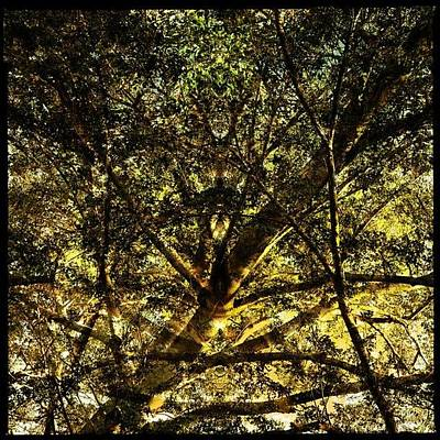 Designs Similar to Manical Mangrove