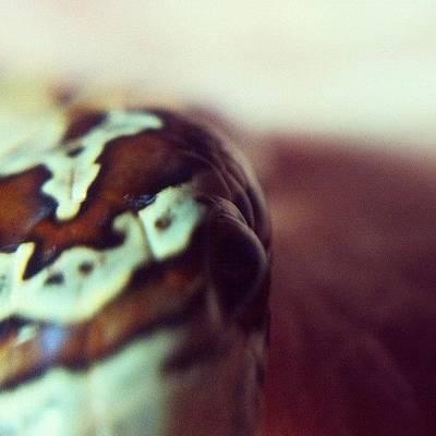 Reptiles Art