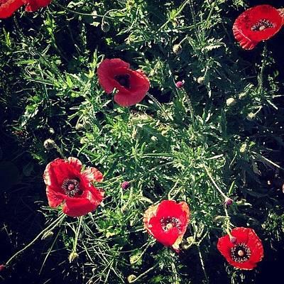 Poppy Photographs