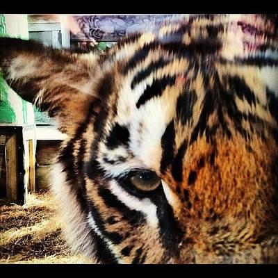 Designs Similar to Tiger by Lea Ward
