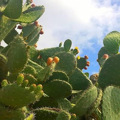 Cactus Photographs