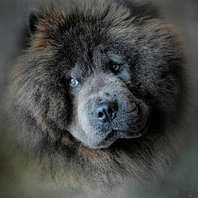 Chow Chow Paintings