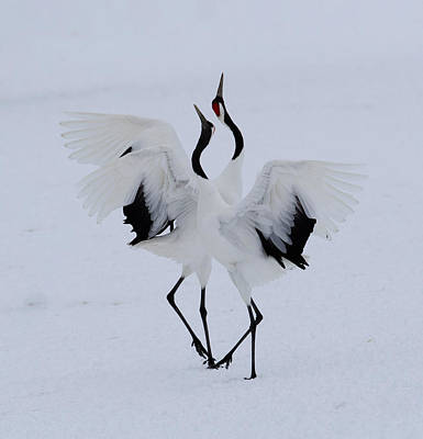 Crane Photographs
