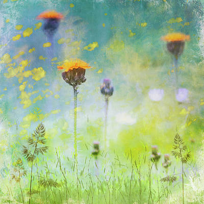 Digital Art - Orange Hawkweed by Glenys Garnett