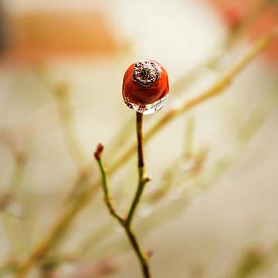Photograph - Last Fruit of Winter by Tiffany J Morisue