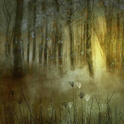 Digital Art - Woodland Dawn by Glenys Garnett