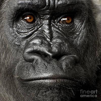 King Kong Photographs